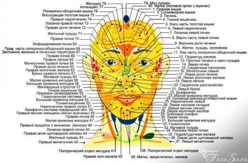 На лице точки органов. Ищем биологически активные точки