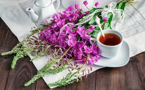Полезные травы для организма человека. Какие травы можно заваривать вместо чая каждый день