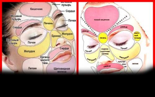 Какие части лица отвечают за внутренние органы. Диагностирование болезней по лицу человека