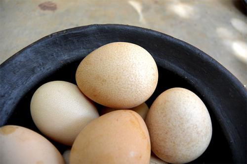 Яйца цесарки польза. Полезные свойства яиц цесарки
