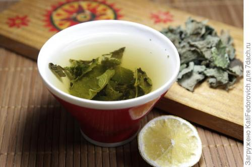Отвар мяты и мелиссы. Чай из мелиссы, мяты и базилика лимонного
